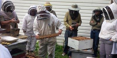 Beginner Beekeeping Course