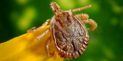 Lyme Disease Support Group