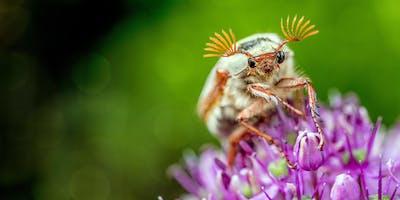 Weavers Way Neighborhood Nutrition Team Workshop: Bug Off! DIY Deet Free Bug Spray