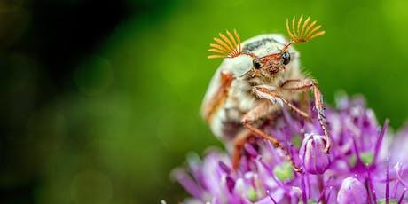 Weavers Way Neighborhood Nutrition Team Workshop: Bug Off! DIY Deet Free Bug Spray tickets