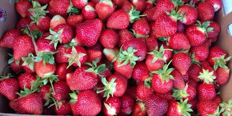 Yoga + Strawberry Picking! tickets