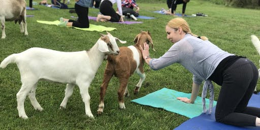 Goat Yoga  on the Homestead