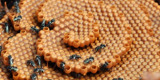 NATIVE STINGLESS BEEKEEPING