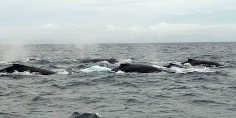 Ecotourisme Baleinier billets