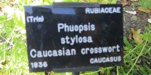 Understanding common & botanical names of plants in...