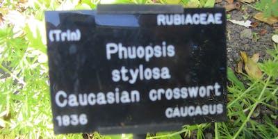 Understanding+common+%26+botanical+names+of+pla