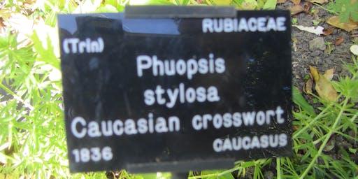 Understanding common & botanical names of plants in the SLBI garden