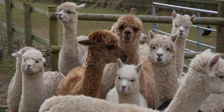 Alpaca Open Morning - August Bank Holiday - Morning Session tickets