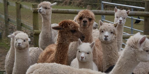 Alpaca Open Afternoon - August Bank Holiday - afternoon session