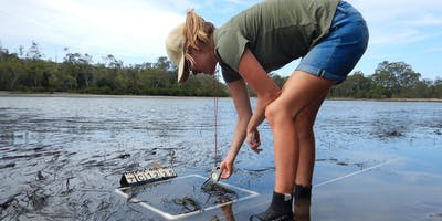 Seagrass... The under rated Ecosystem Hero (Green Week Event)