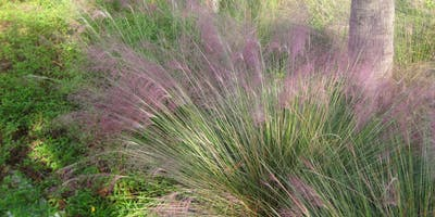 Lunch and Learn: Ornamental Grasses