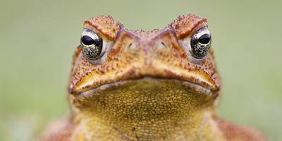 Gold Coast Cane Toad Challenge Launch (Green Week Event)