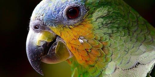 Vogelflug im Weltvogelpark Walsrode - Schwerpunkt Autofokussystem