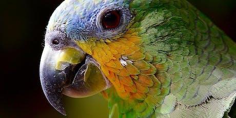 Vogelflug im Weltvogelpark Walsrode - Schwerpunkt Autofokussystem Tickets