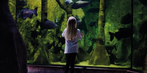 Quiet at the Aquarium - Annual Pass Bookings 6th October