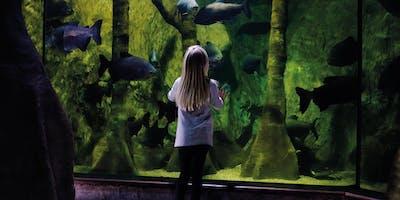 Quiet at the Aquarium - Annual Pass Bookings 15th December. Meet Santa!