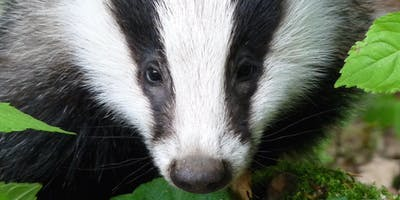 Scottish Badgers Annual Conference, Saturday 12th October 2019, PERTH