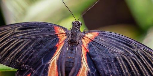Makrofotografie im Schmetterlingshaus