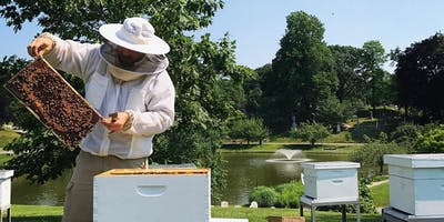 Beekeeping for Bee-ginners, 5 Class Course