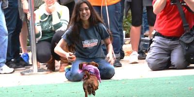 The 6th ANNUAL WIENER DOG DERBY