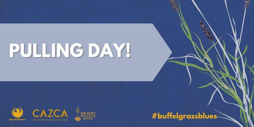 #BuffelgrassBlues Pulling Day
