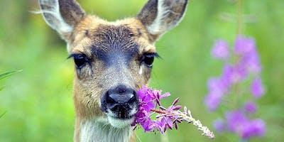 Not Tonight Deer - CH