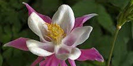Basic Botany - Vegetative Reproduction  tickets