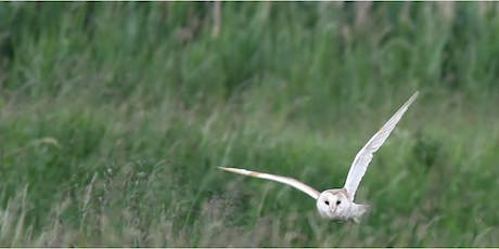 Nature by Night at RSPB Ham Wall tickets