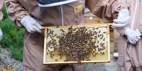 Bee Health Event / Digwyddiad Iechyd Gwenyn tickets