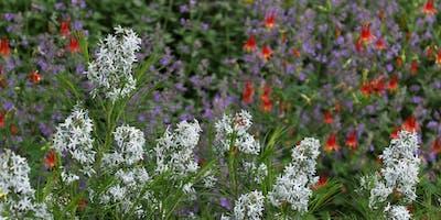 Spring Pollinator Garden Design Workshop