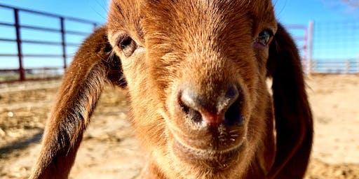 Goat Yoga at Reserve Run Family Farm