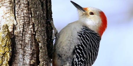 Joint Bird Walk with Black River Audubon Society to French Creek Reservation tickets
