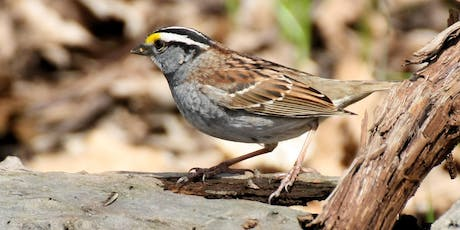 Joint Bird Walk with Black River Audubon Society tickets