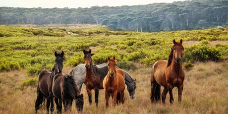 Horse Psychology for Beginner Evening Course tickets