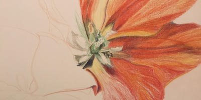 Introduction to Drawing for Teens and Adults