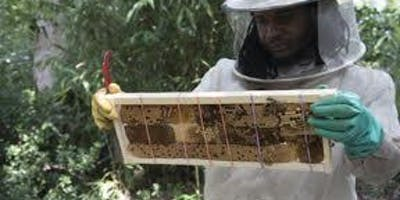 Intermediate Beekeeping 201