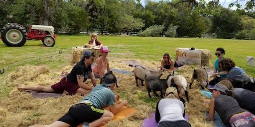 2019 Goats & Yoga
