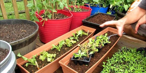 Successfully Grow a Garden in Containers! (Master Gardener-Led Workshop)