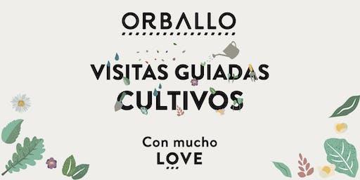 Visita guiada cultivos y degustación Orballo.