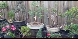 Bonsai for Fun