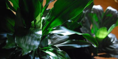 Plant Care 101 Workshop