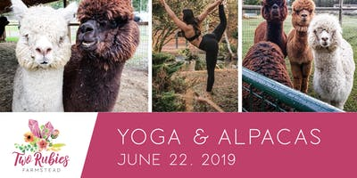 Yoga and Alpacas Experience
