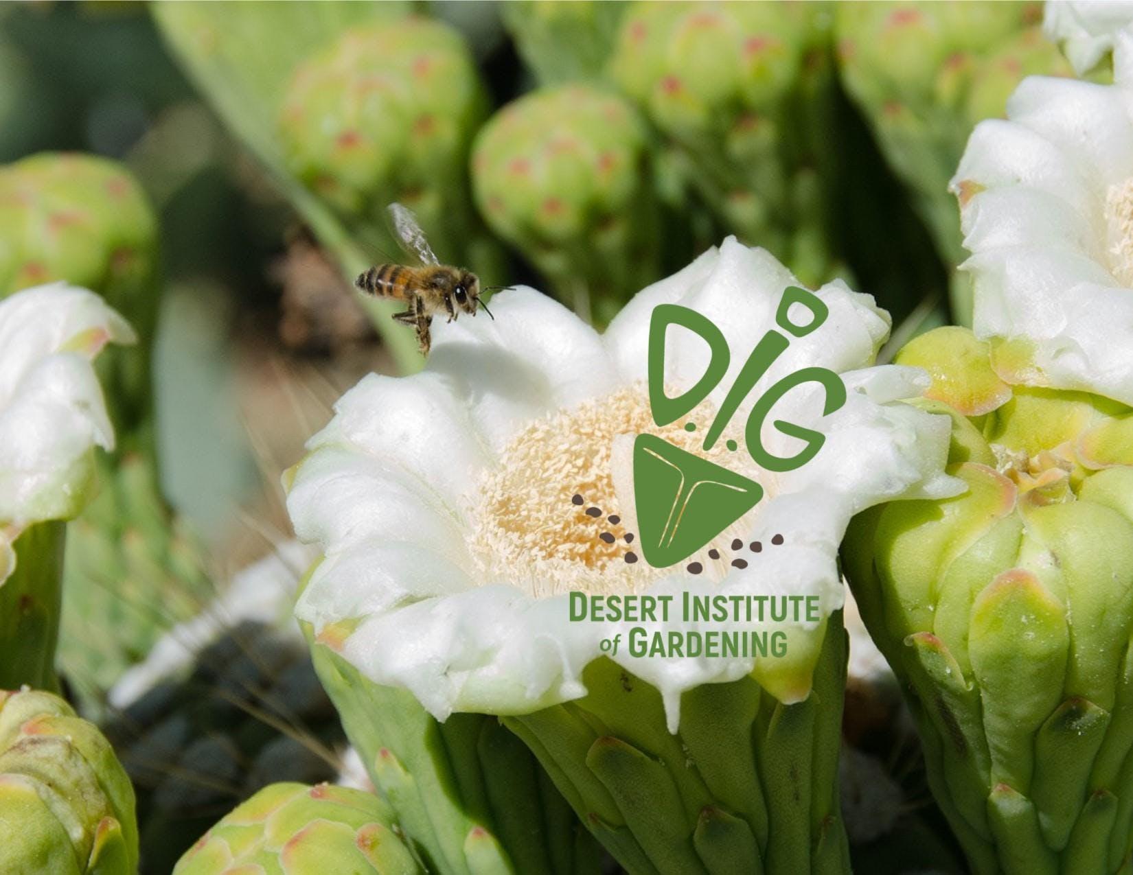 Desert Institute of Gardening- Cacti & Succulents