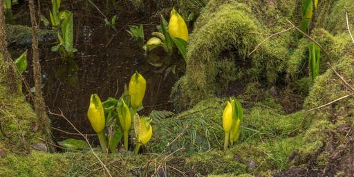 Indigenous Plant Use
