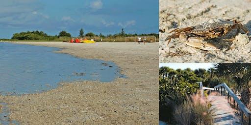 Beach Exploration - Tiger Tail Beach