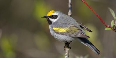 Guided Birding Tour: Allegan State Game Area