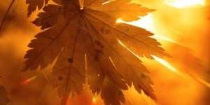 Spell Rebellion-Fall Equinox Ritual