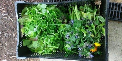 Edible Weeds Workshop