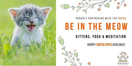 (Brisbane) Be in the Meow - Kitten Yoga
