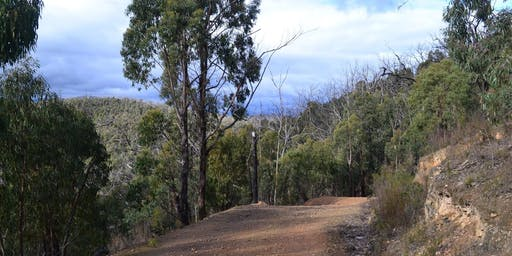 Mount Everard Circuit-Kinglake  20kms - 17th of Nov, 2019